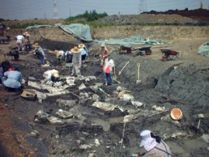 城敷遺跡:河川跡の調査
