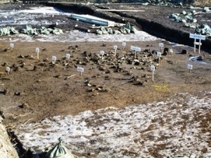 小林八束1遺跡:祭祀遺物集中地点