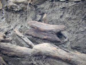 城敷遺跡:竪杵
