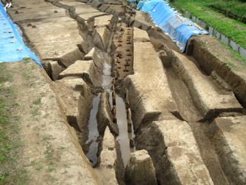 長竹遺跡:堤防関連の杭列(近代)