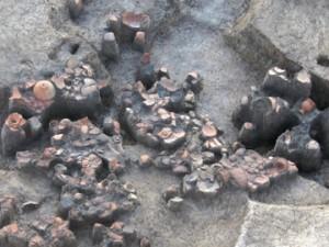 富田後遺跡:周溝の窪地に捨てられた土器