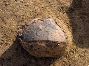天神台東遺跡:櫛描文を描いた弥生土器